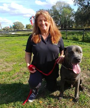 Lynn Conway, Euro Pros' General Manager & Training Director with Ranger, a Cane Corso that Lynn is working with.
